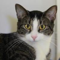 Adopt A Pet :: SPARROW - Kyle, TX