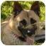 Photo 4 - German Shepherd Dog Mix Dog for adoption in Los Angeles, California - Cami von Callahan