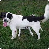 Adopt A Pet :: Kenny B.-ADOPTION PENDING! - Columbus, OH
