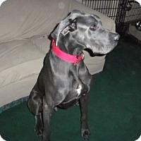 Adopt A Pet :: Norman - Martinsburg, WV