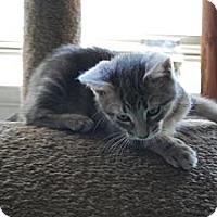 Adopt A Pet :: KoKo - Jenkintown, PA