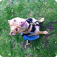 Adopt A Pet :: Emma - New Canaan, CT