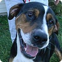 Adopt A Pet :: Hauns - Jacksonville, FL