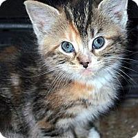 Adopt A Pet :: Trina *ADOPTION PENDING! - Xenia, OH