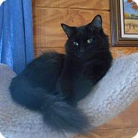 Adopt A Pet :: Luna - Richland, MI