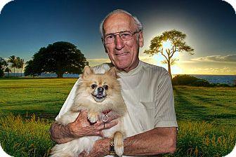 Pomeranian Mix Dog for adoption in Livonia, Michigan - Caesar - Adopted 06/20/2015