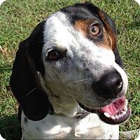 Adopt A Pet :: Otis - Homewood, AL