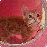 Adopt A Pet :: Cash - Ocala, FL