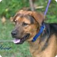 Hound (Unknown Type) Mix Dog for adoption in Middleburg, Florida - Moose