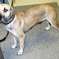 Adopt A Pet :: Noel - Eastpoint, FL