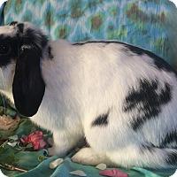 Adopt A Pet :: Nashringa - Williston, FL