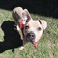 Adopt A Pet :: JONAH - Houston, TX