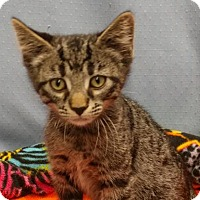 Adopt A Pet :: Dima - Greenville, IL