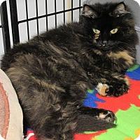 Adopt A Pet :: Pepper - Glenwood, MN