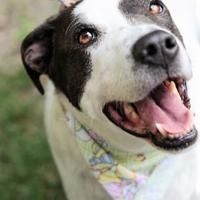 Adopt A Pet :: Pixie - Indianapolis, IN