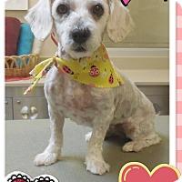 Adopt A Pet :: Maggie - Brea, CA