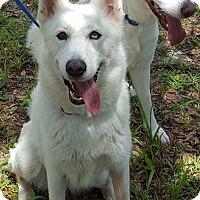 Adopt A Pet :: Dot - New Smyrna Beach, FL