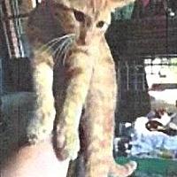 Adopt A Pet :: Amelia - adoption pending - Tipp City, OH