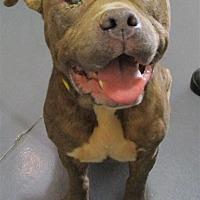 Adopt A Pet :: 17-09-2822 Fester - Dallas, GA