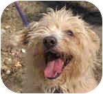 Terrier (Unknown Type, Medium) Mix Dog for adoption in Eatontown, New Jersey - Sprite