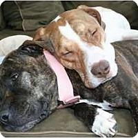 Adopt A Pet :: Eli - Dallas, PA