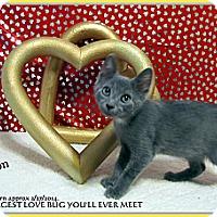Adopt A Pet :: Dyson - Orlando, FL
