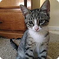 Adopt A Pet :: Junior - Modesto, CA