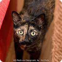 Adopt A Pet :: Lexi - Fountain Hills, AZ