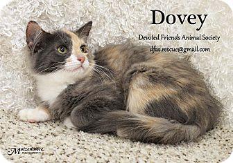 Calico Kitten for adoption in Ortonville, Michigan - Dovey