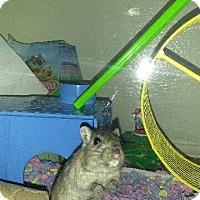 Adopt A Pet :: skittles - haslet, TX
