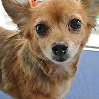 Adopt A Pet :: Star - Southeastern, PA