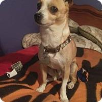 Adopt A Pet :: SUAVE - Hampton, VA