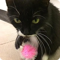 Adopt A Pet :: Evangeline - Byron Center, MI