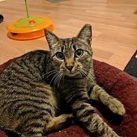 Adopt A Pet :: Jaycee - Concord, NC