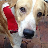 Adopt A Pet :: Hydro - Staten Island, NY