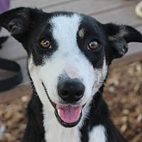 Adopt A Pet :: GYPSE - Red Bluff, CA