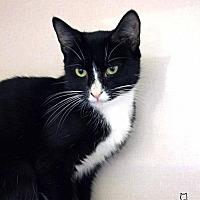Adopt A Pet :: Caliegh - Paris, ME