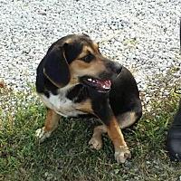 Adopt A Pet :: Miss Minnie - Nanuet, NY