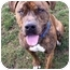Photo 2 - Pit Bull Terrier Mix Dog for adoption in Phoenix, Oregon - Alibi