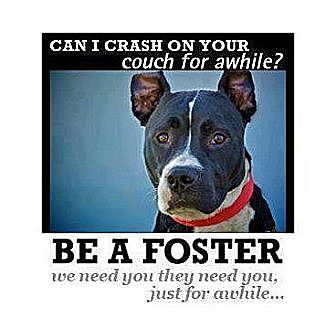 Boxer/Boxer Mix Dog for adoption in Bennington, Vermont - We need foster home volunteers