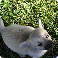 Adopt A Pet :: POOMBA - Hesperus, CO
