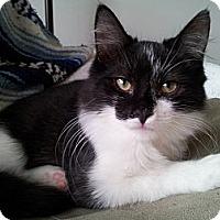 Adopt A Pet :: O'Mally (KL) - Little Falls, NJ