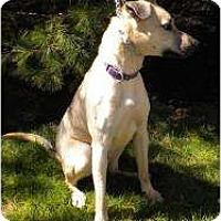 Adopt A Pet :: Frazier - Warren, NJ