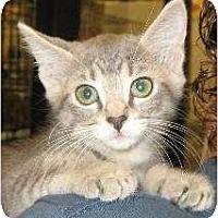 Adopt A Pet :: Sofia - Schertz, TX