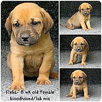 Adopt A Pet :: Reba - Evansville, IN