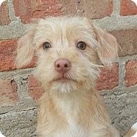 Adopt A Pet :: Silas*ADOPTED!* - Chicago, IL