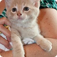 Adopt A Pet :: Milo - Xenia, OH