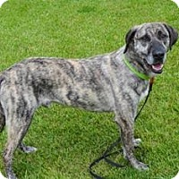 Adopt A Pet :: Merlin - Tipp City, OH