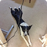 Adopt A Pet :: WAVER *video!* - Nampa, ID