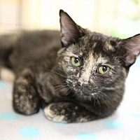 Adopt A Pet :: Marlee - Olive Branch, MS